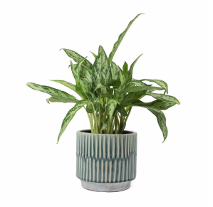 A trendy vintage plant pot for your mum or your nan. The perfect Christmas Gift